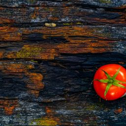 Tomato on table