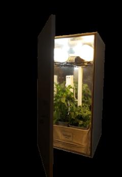 CFL Grow Box